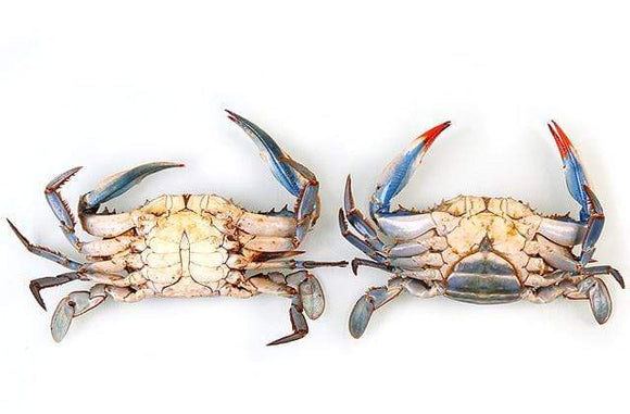 Arnilene Seafoods (Quezon City) Blue Crabs Medium 1kg