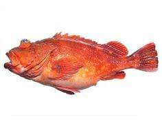 Arnilene Seafoods (Quezon City) Lapu Lapu (Low Class) 1kg