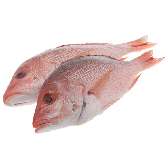 Arnilene Seafoods (Quezon City) Maya Maya (First Class) 1kg