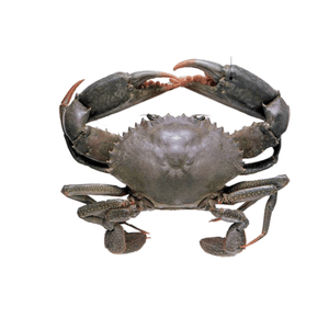 Arnilene Seafoods (Quezon City) Mud Crabs Small 1kg