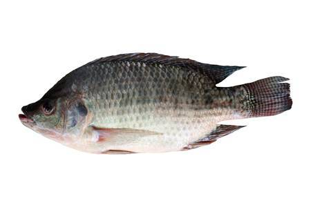 Arnilene Seafoods (Quezon City) Tilapia Medium 1kg
