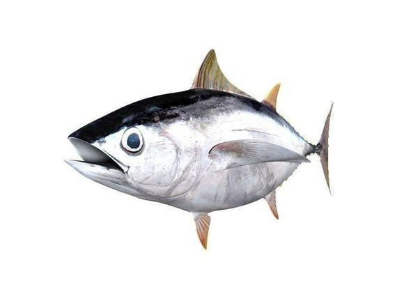 Arnilene Seafoods (Quezon City) Yellow Fin 1kg
