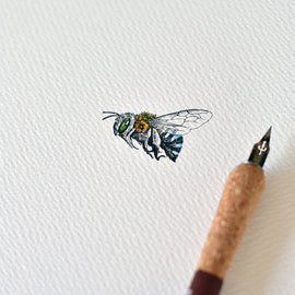 Blue Banded Bee Card