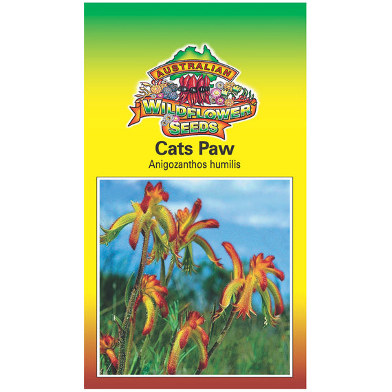Cats Paw Seeds