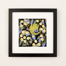 Blue Wren Among the Marri Blooms Print
