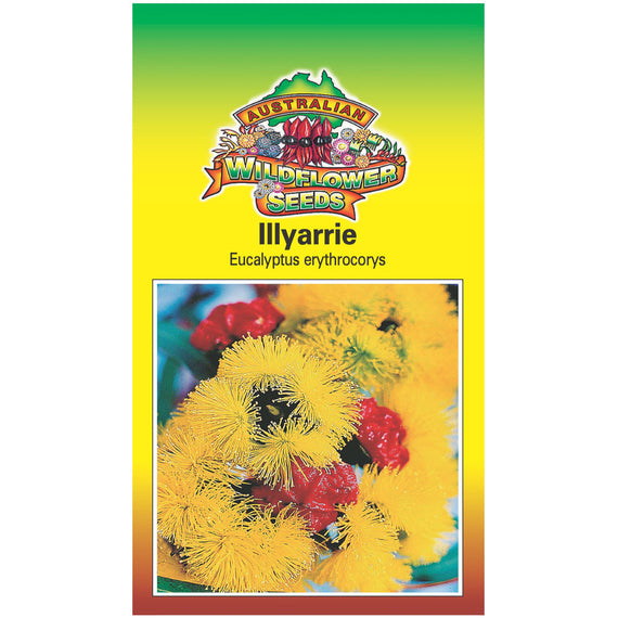 Illyarrie Seeds