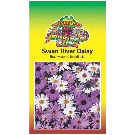 Swan River Daisy Seeds