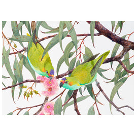 Purple-crowned Lorikeets amongst the Blossom Print