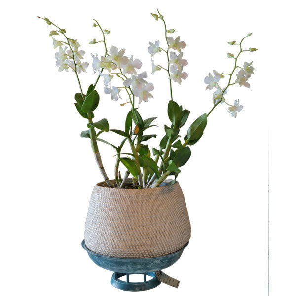 Rattan Planter Basket