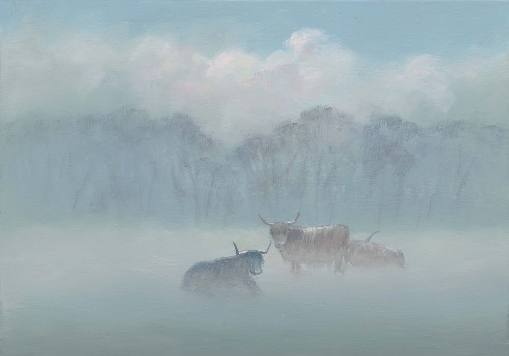 Highland Cattle in the Mist