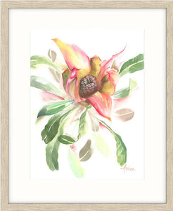 framed scenario of a watercolour painting of a waratah's open bud