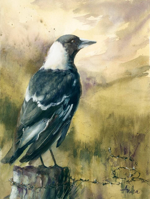 Magpie on a Country Post - Limited Edition Print