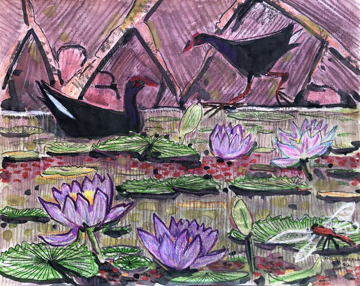Limited edition print - Moorhens and waterlilies