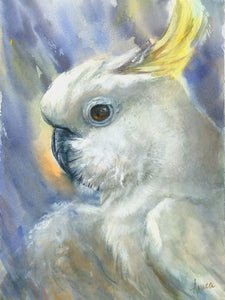 Tales of a Sulphur Crested Cockatoo - Limited edition prints