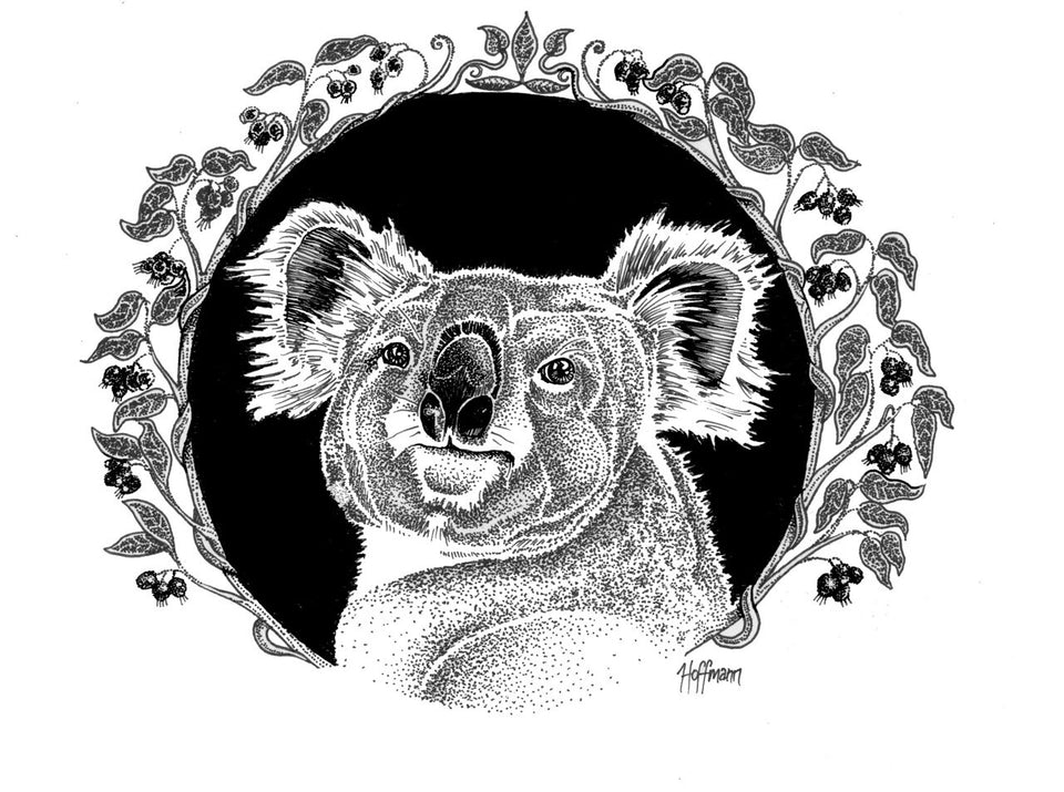 Koala 'National Treasure'