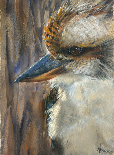 Portrait of a Kookaburra - Limited edition prints