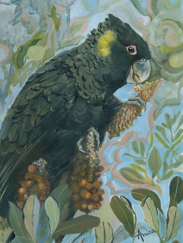 watercolour gouache painting of a black cockatoo eating banksia on a funky abstract background
