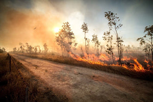 Burning Paddocks