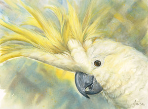 SOLD - Sunny the Sulphur-Crested Cockatoo