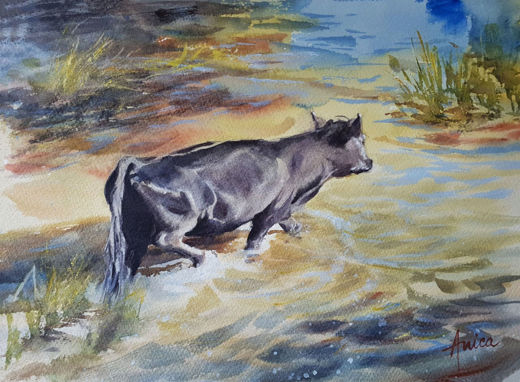 watercolour animal landscape of a black cow crossing shallow water