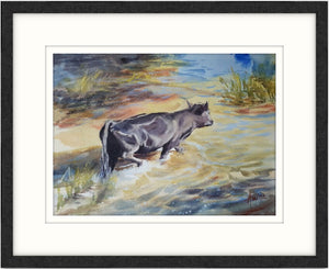 Framed watercolour animal landscape of a black cow crossing shallow water