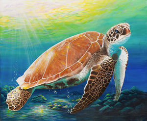 Green sea turtle limited edition giclee print