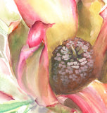 close up detail of a watercolour painting of a waratah's open bud