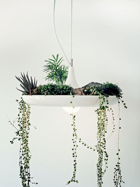 "The Babylon Light is a multifunctional pendant for those who love plants but not the clutter of flowerpots.   Provides downlighting up to 180° horizontally. Ideally suited as a centrepiece above tables, working surfaces and transitional areas. Ideal for succulents, ground coverings and air plants. Dimensions: 38cm x 15cm / 15"" x6"""