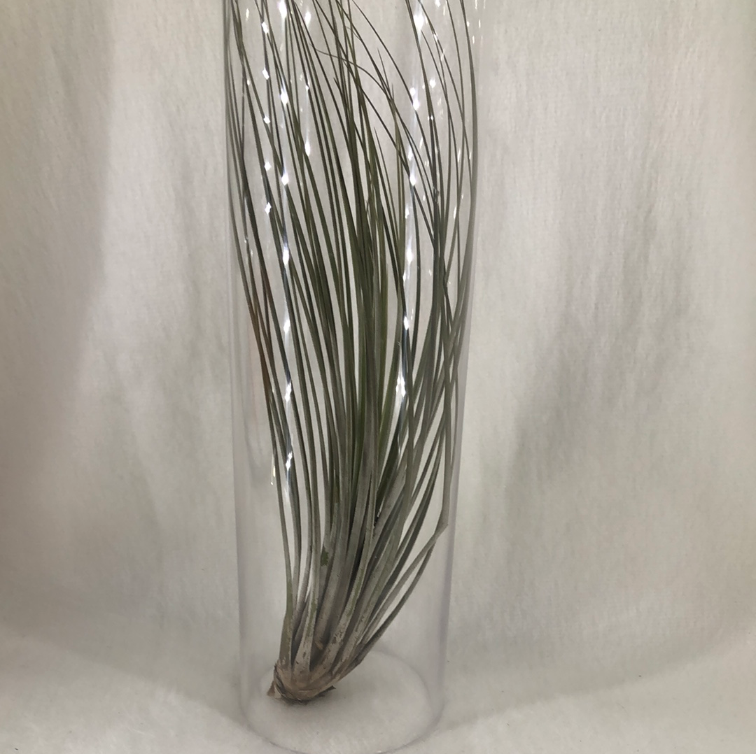 Glass candle cover/air plant holder