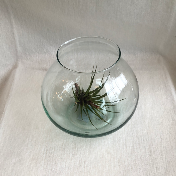 Recycled glass Terrarium vase