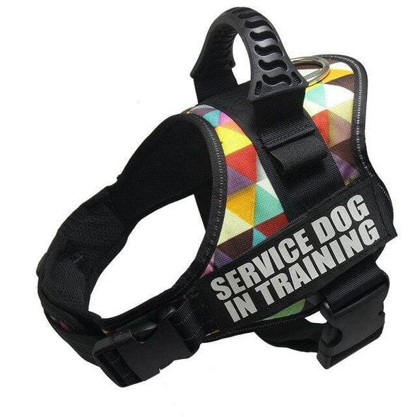 Custom Dog Harness -
