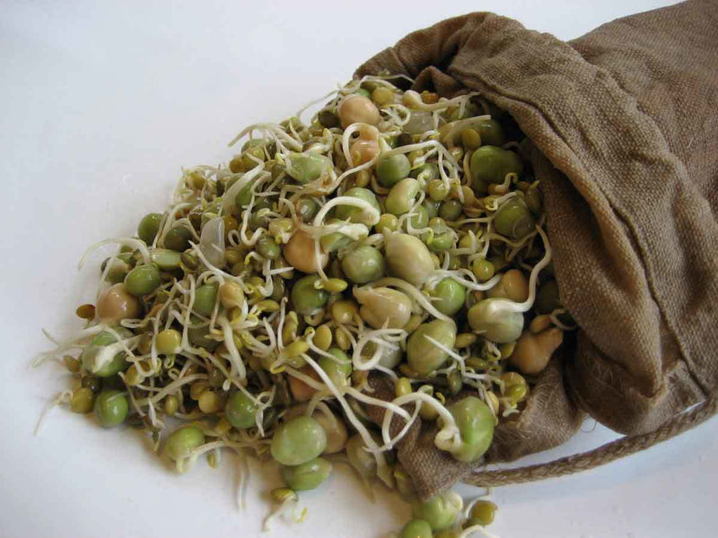 Sproutman's Hemp Sprout Bag - Just Dip In Water, Hang It Up, & Watch 'em Grow!