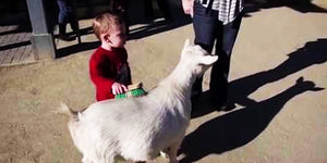 LOL! We Were Shocked by This Kid's Wild Reaction When His Goat Friend Farted