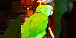 Your Jaw Will Drop When You See This Cute Singing Parrot's Hilarious Performance