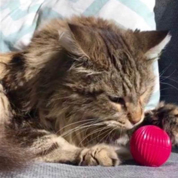 Cat Babble Ball