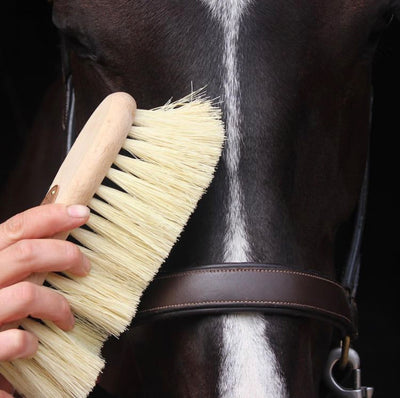 Grooming Brushes - Choosing Quality