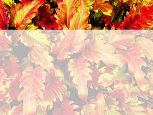 free-autumn-leaves-powerpoint-background