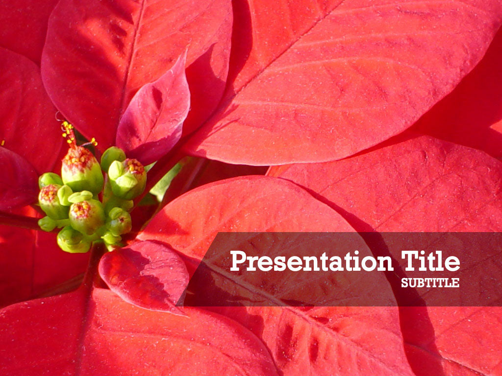 free-christmas-flowers-PPT-template