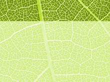 Load image into Gallery viewer, free-green-leaf-powerpoint-background