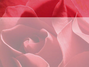 free-valentines-flowers-powerpoint-background