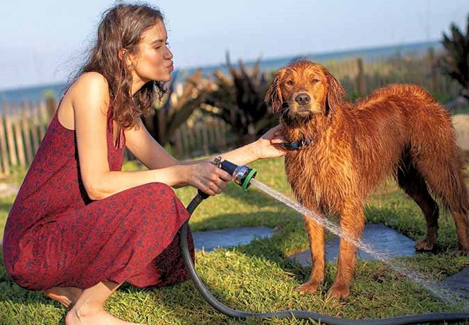 Girl giving dog a bath