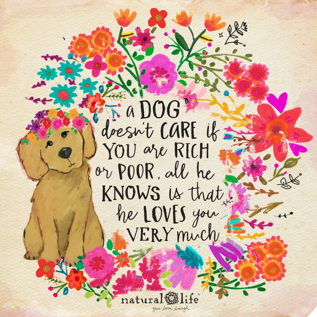 a dog doesn't care if you are rich or poor all he knows is that he loves you very much