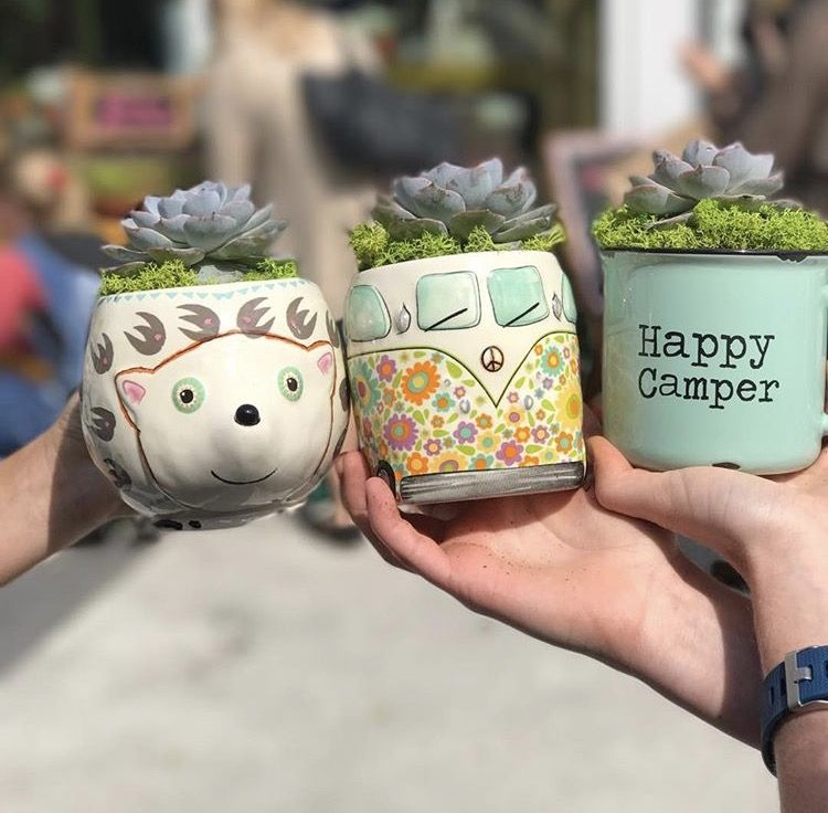 Natural Life mugs with succulents planted inside