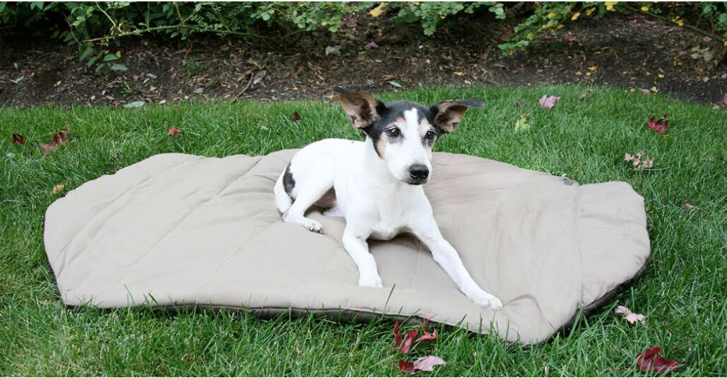 Carolina Pet Company Bed in a Bag