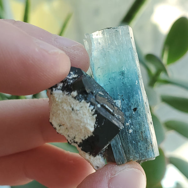 19 g Erongo Aquamarine With Tourmaline Growth and natural Quartz, From Erongo Region, Namibia