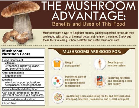 Benefits and uses of mushrooms