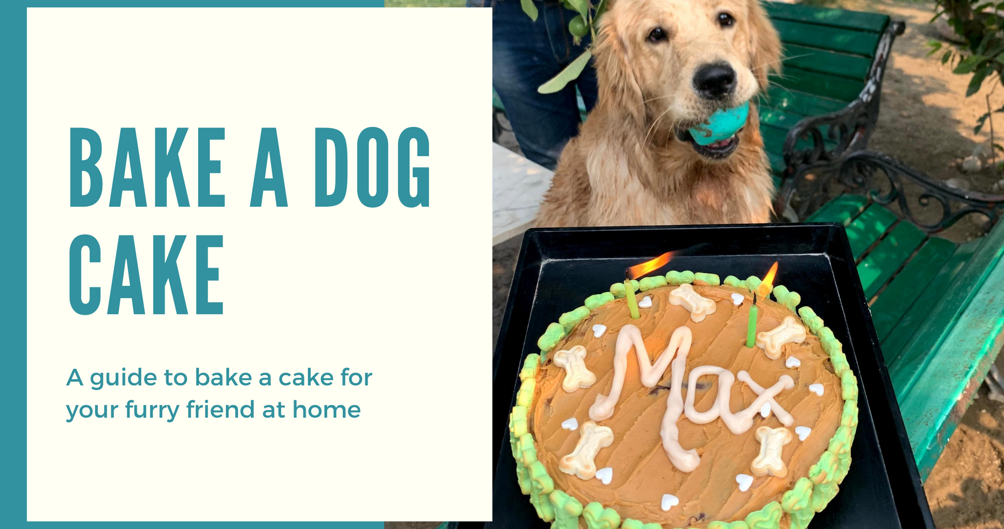 Bake a Cake for your Furry Friend at Home!