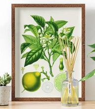 Load image into Gallery viewer, Citrus tonic reed diffuser