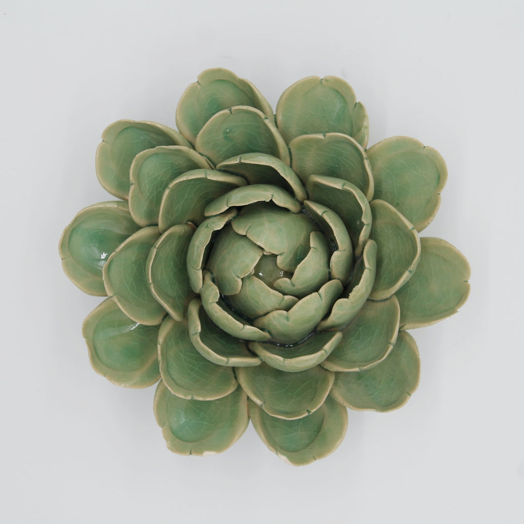 Coral 6 - Large Succulent Green