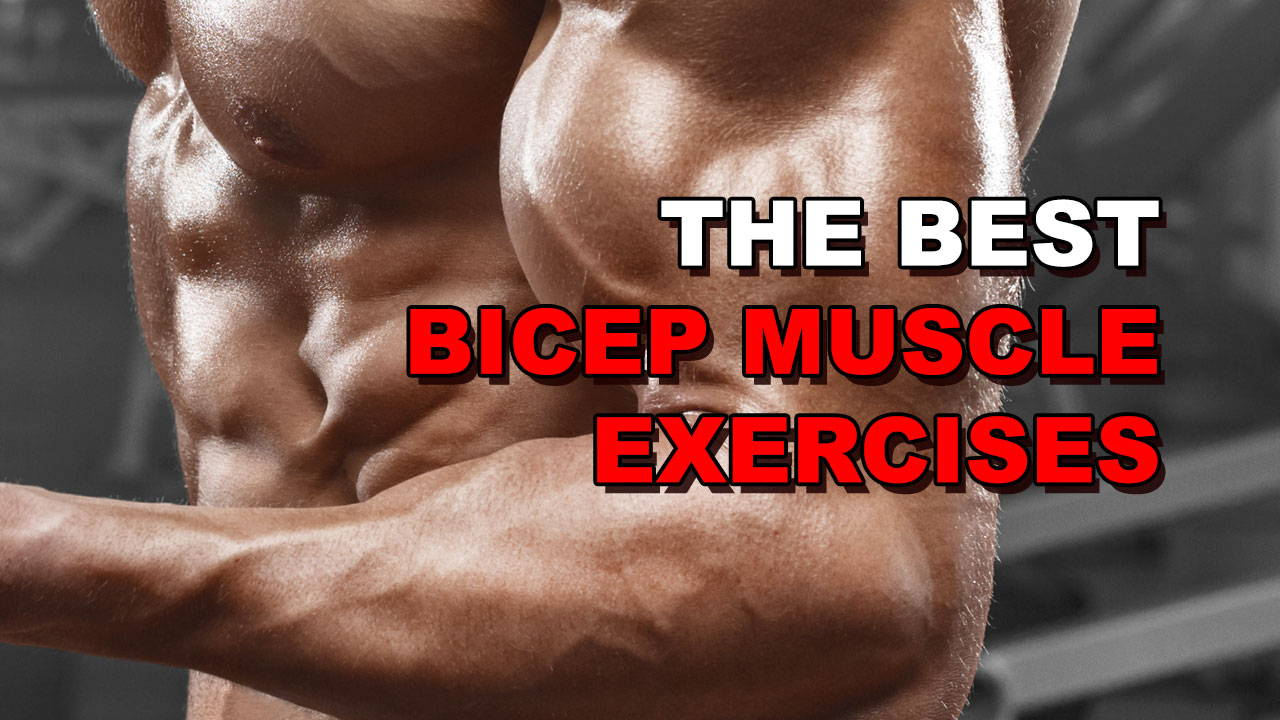 The 5 Best Bicep Muscle Exercises for Rapid Growth